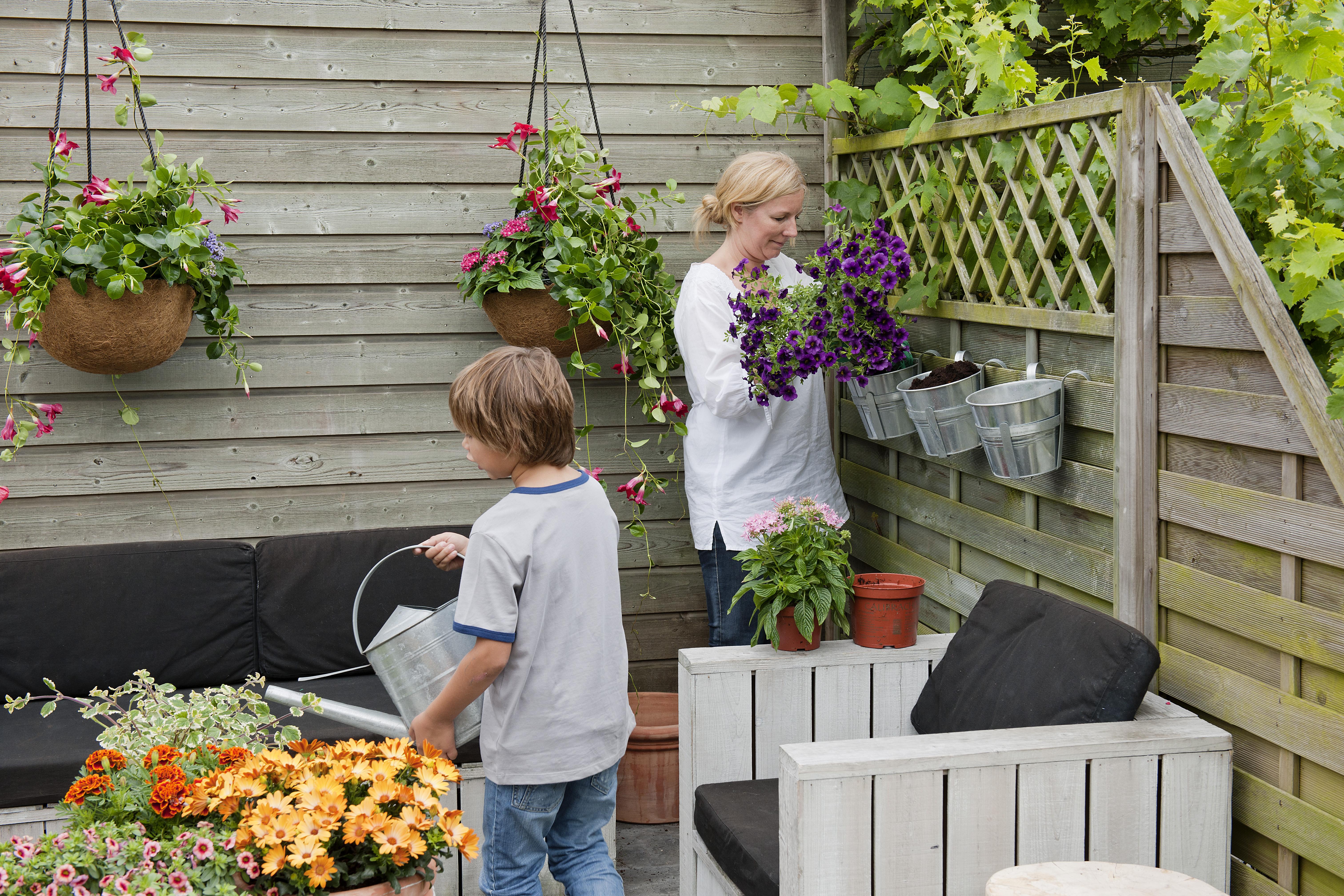 Terrasse en bois  quelles plantes pour la décorer ?