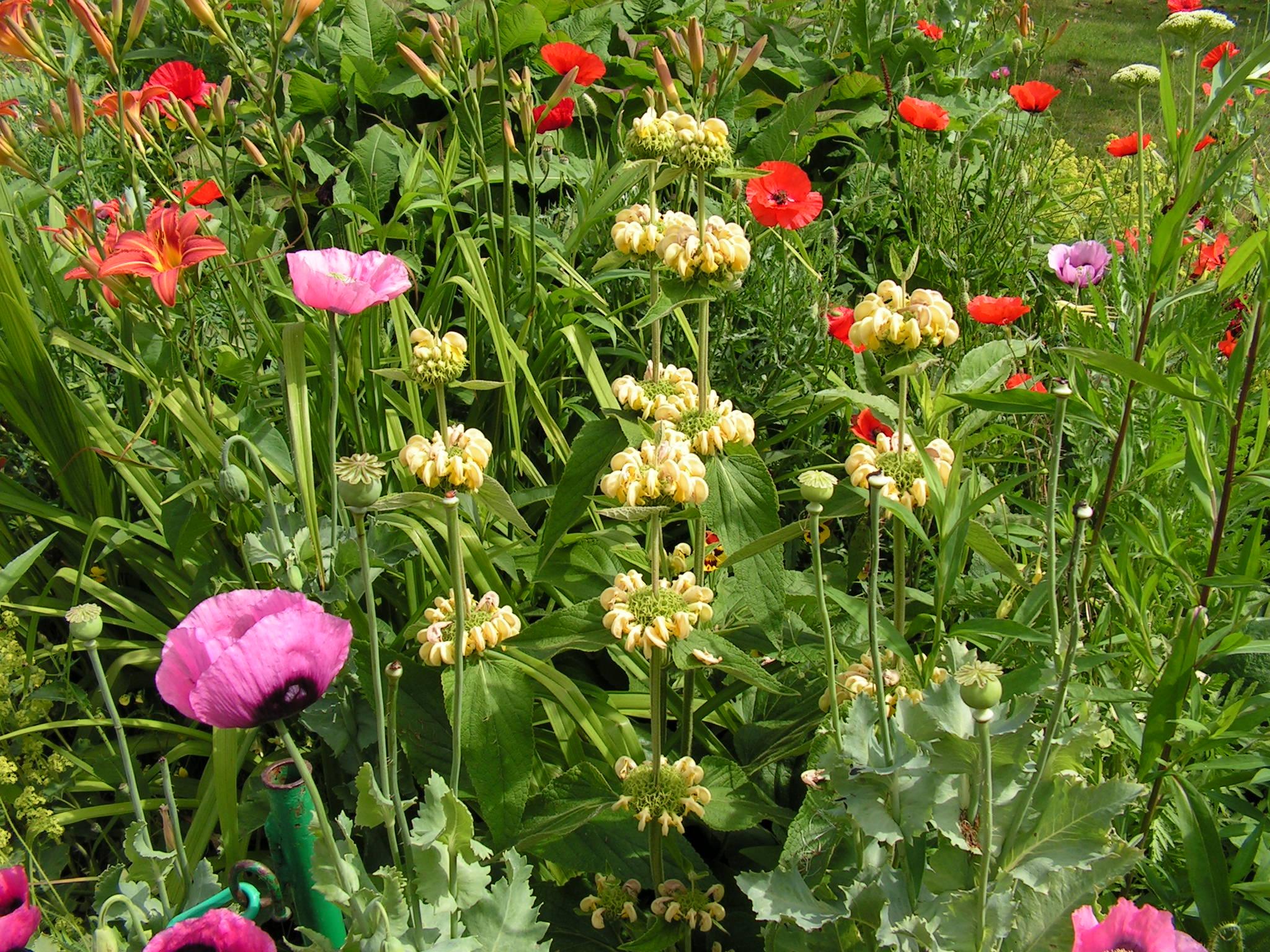 Le Jardin de Giverny