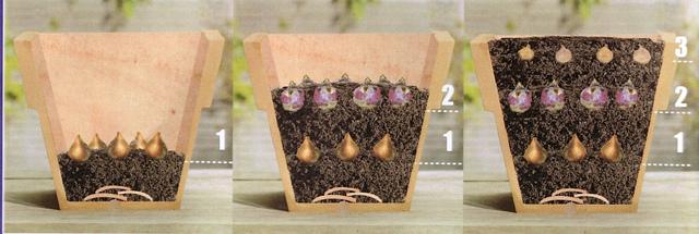 comment planter des bulbes ? conseils plantation bulbes