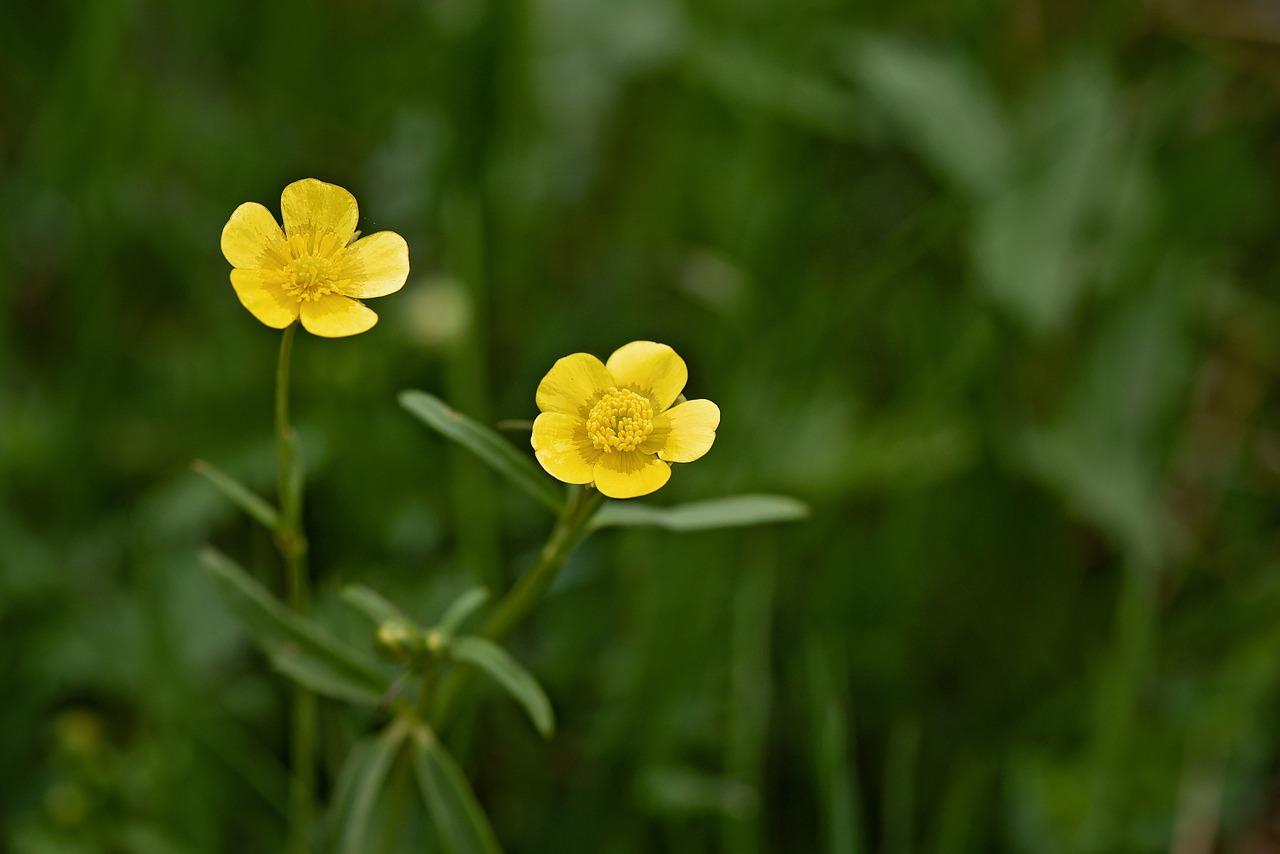 mauvaises herbes : comment les reconnaître et les enlever ?