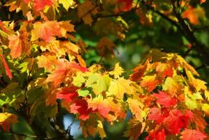 jardiner-en-octobre