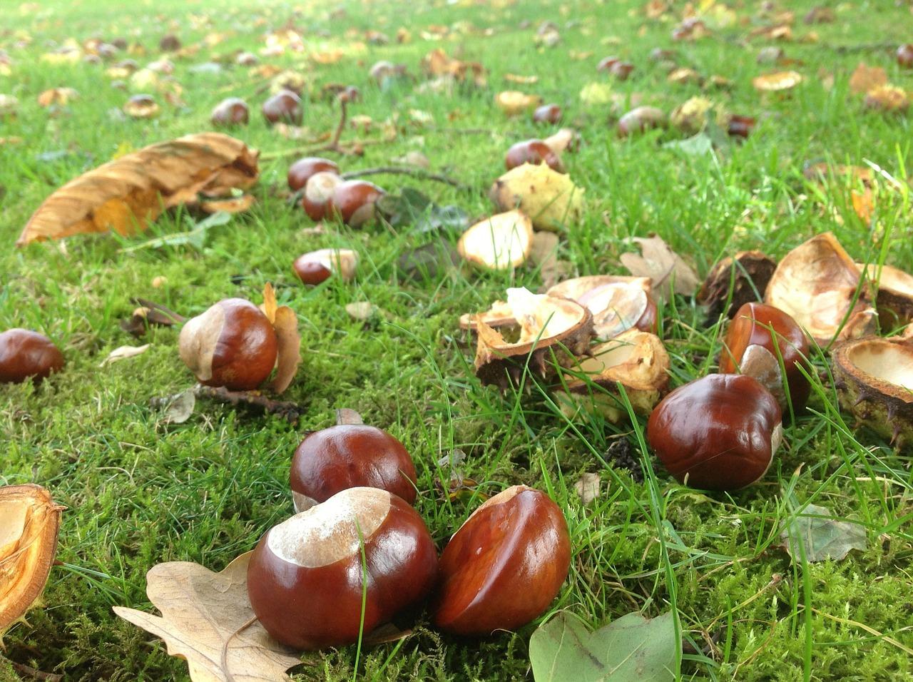 Que faire en novembre au jardin for Jardin que planter en novembre