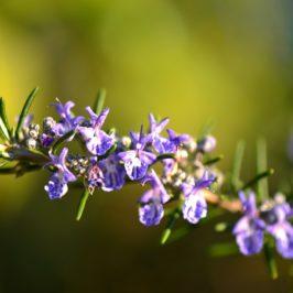 Comment faire pousser des plantes aromatiques sans posséder de jardin ?