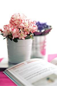 azalee-jardiner-fevrier