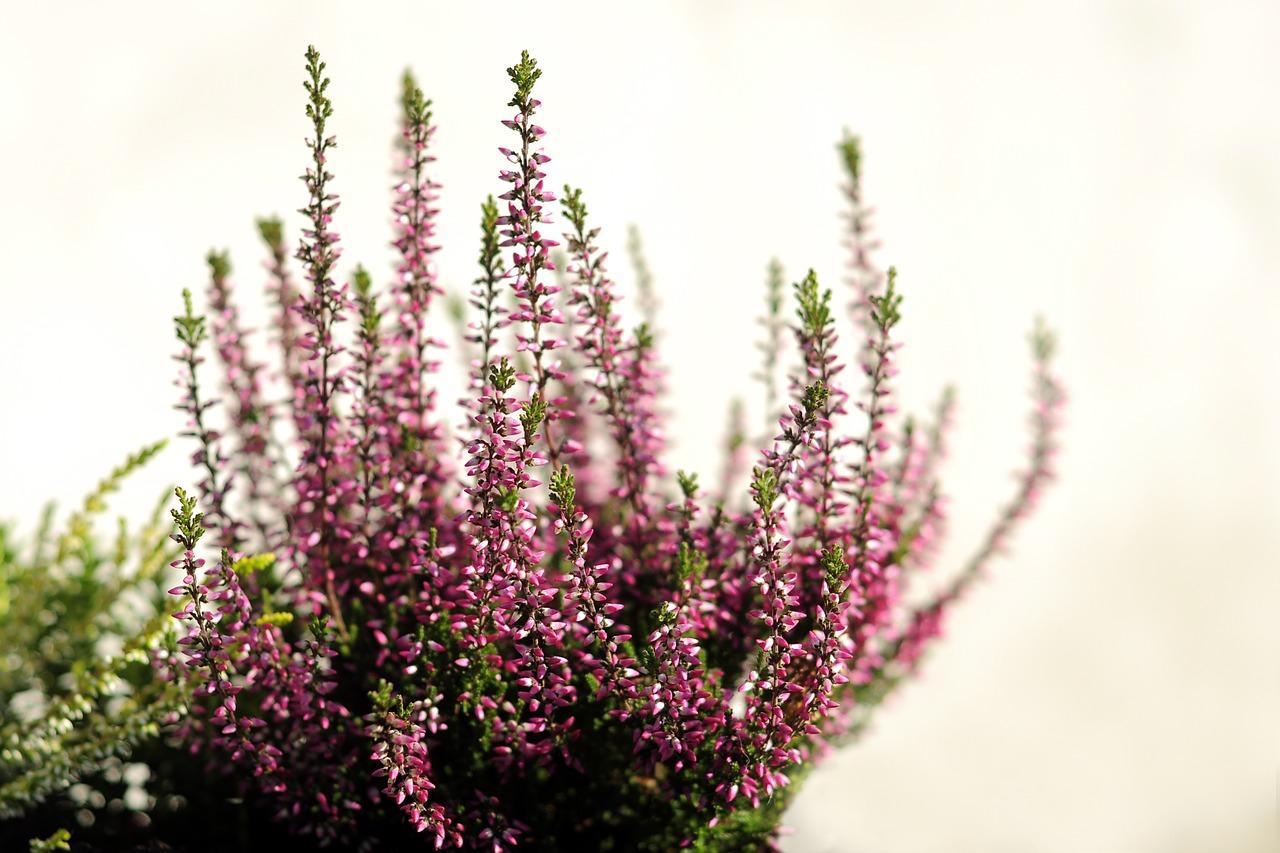 Quelles Plantes Pour Fleurir Mon Balcon En Automne