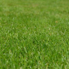 Comment rajeunir votre vieille pelouse facilement ?