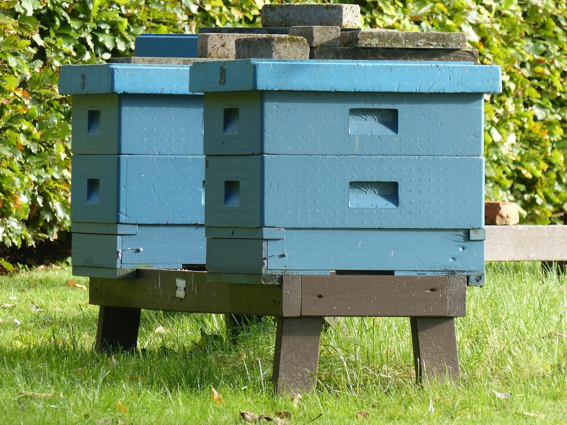 Installer une ruche dans son jardin for Avoir une ruche dans son jardin