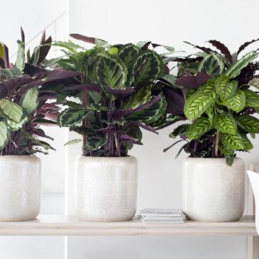 Bien soigner ses plantes d'intérieur