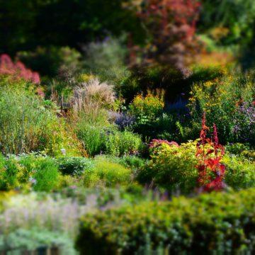 Plantes Vivaces – Conseils de plantation et d'entretien