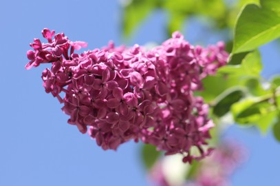 Comment planter un arbuste dans son jardin ?
