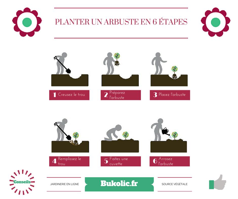 planter-arbuste