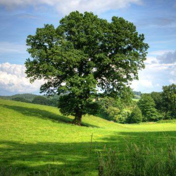 La photosynthèse c'est quoi ?