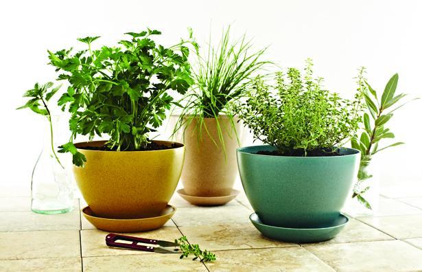 Des Plantes Aromatiques A La Maison