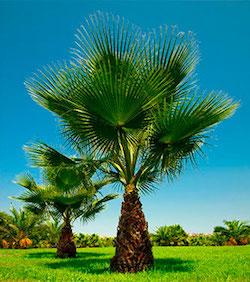 21+ Differents palmiers d exterieur ideas in 2021