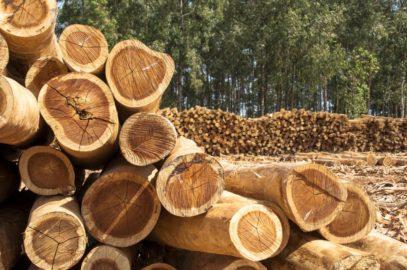 Comment abattre un arbre en toute sécurité à l'aide d'une tronçonneuse ?