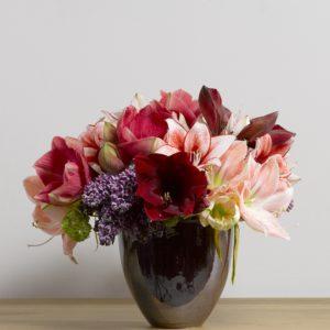 conseils fleurs amaryllis