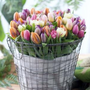 bouquet-tulipe-coloré-2