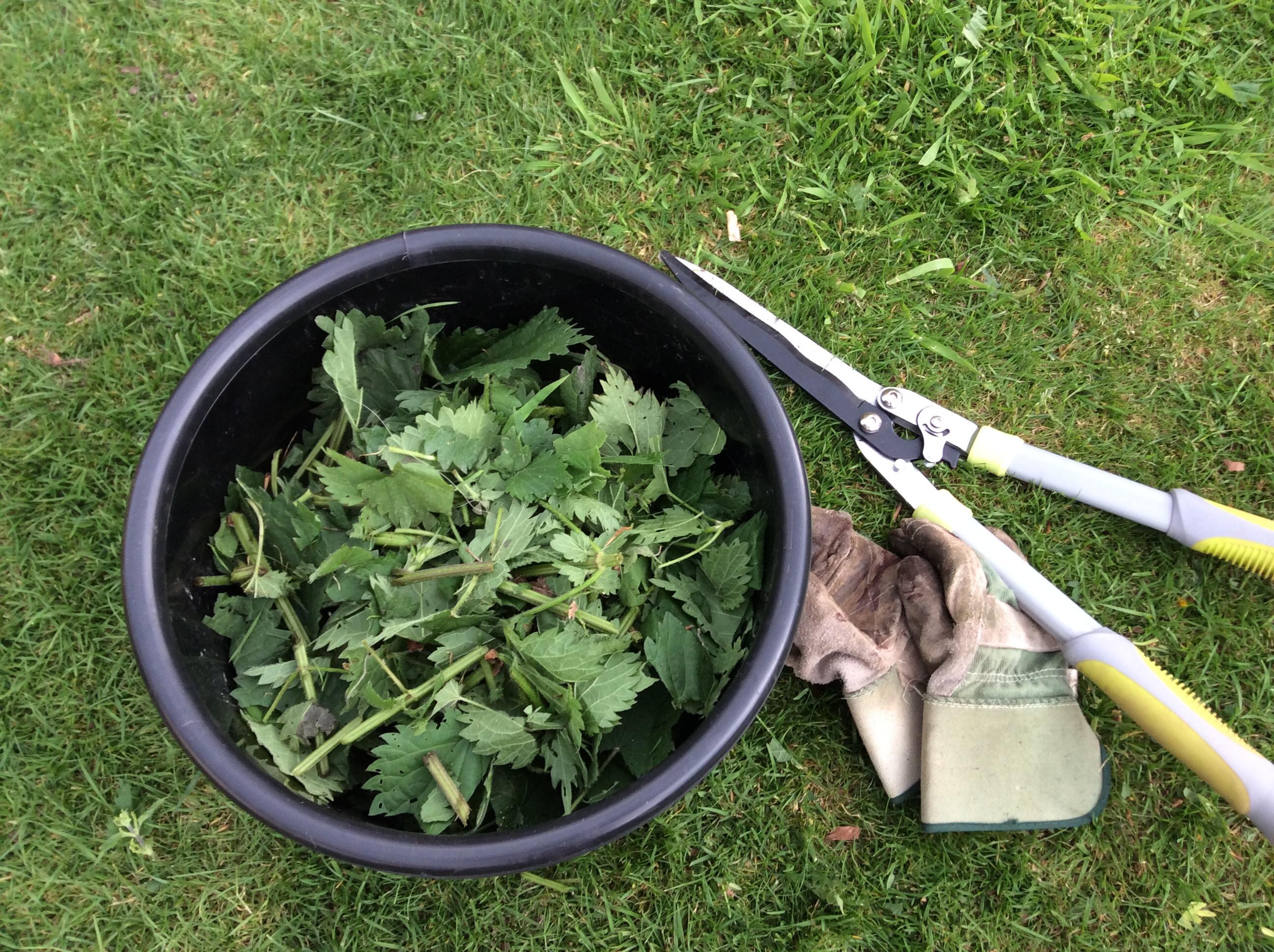 Bicarbonate De Soude Contre Les Pucerons jardiner bio: faire du purin d'ortie, utiliser le