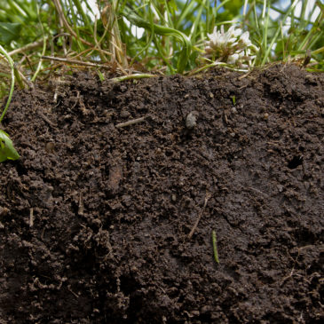 Comment connaître et améliorer la terre de son jardin ?