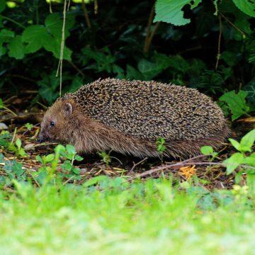 Comment favoriser la biodiversité dans votre jardin ?