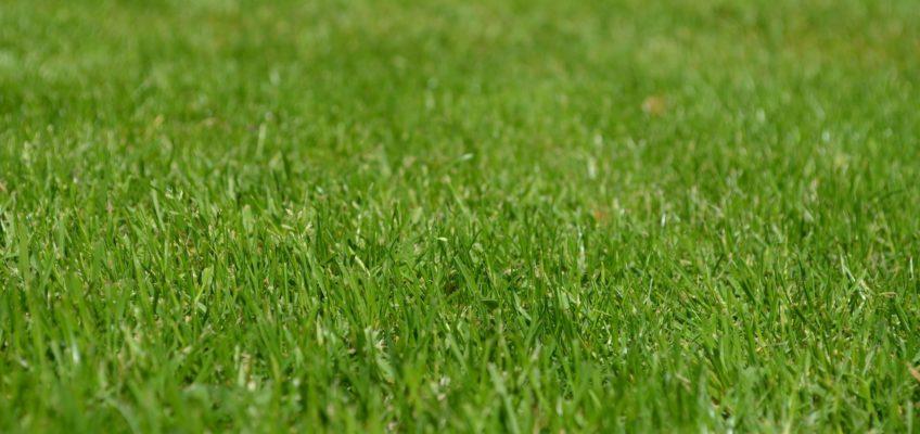 Préparer et semer une pelouse