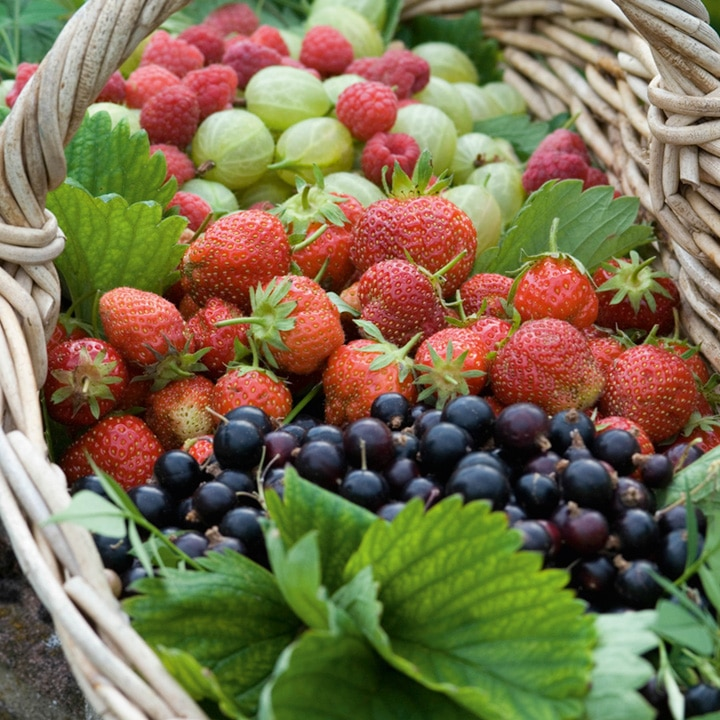 Réussir un jardin gourmand en pot