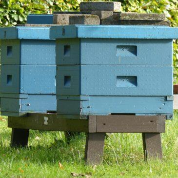 Installer une ruche dans son jardin !
