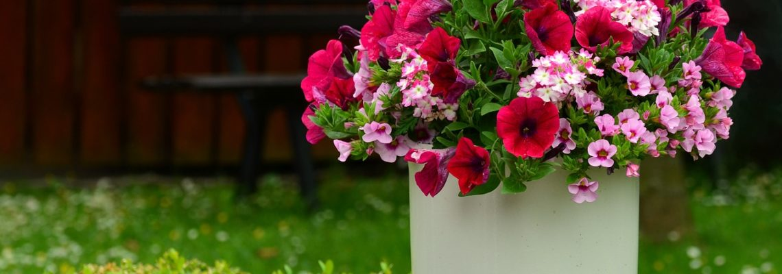 Comment planter des végétaux en pots ?