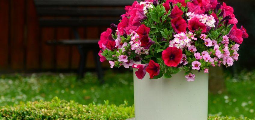 Un jardin facile à vivre et à entretenir