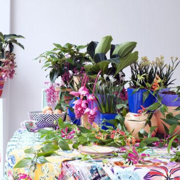 La plante chauve-souris - Tacca Chantrieri