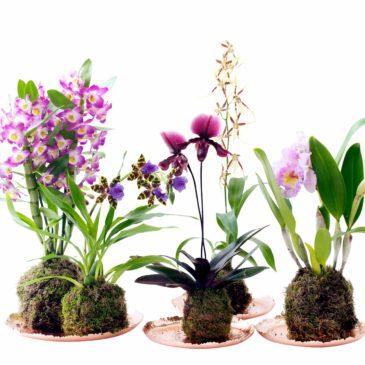 4 orchidées pour débutants- Super facile à entretenir !