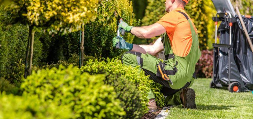 Pourquoi faire appel à un paysagiste pour un aménagement d'extérieur ?