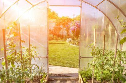 Protéger ses plantations des intempéries