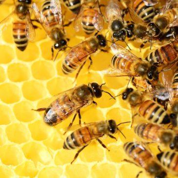Comment devenir un expert en apiculture?